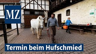Pferdedame Selma beim Hufschmied