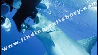 Great White Shark Attacks Boat. Shark Island Discovery.