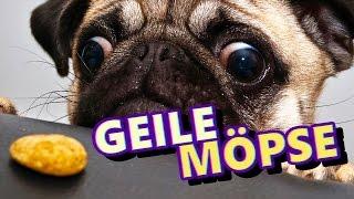 GEILE, FEISTE MÖPSE 💀 TTT #064 ★ Trouble in Terrorist Town