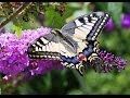 Butterflies and Flowers - 1 Hour Nature ...mp3
