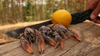 Freshwater YABBIES - Catch n Cook | TDB