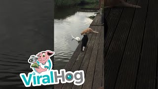 Swimming Cat  || ViralHog