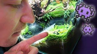 Garnelen füttern im UFO Aquarium!