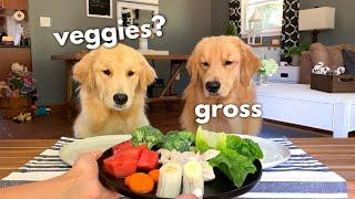 Dog Reviews Food With Girlfriend | Tucker Taste Test 12