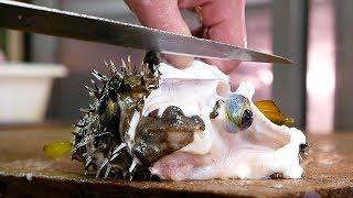Japanese Street Food - PUFFERFISH Puffer Fish Okinawa Seafood Japan