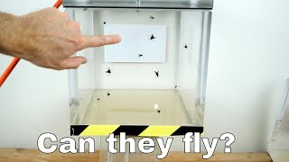 Can Flies Actually Fly in a Vacuum Chamber?