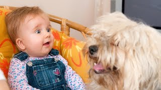 Funny Babies Talking to Dogs Compilation (2014)