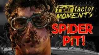 Fear Factor Moments   Tarantula Pit