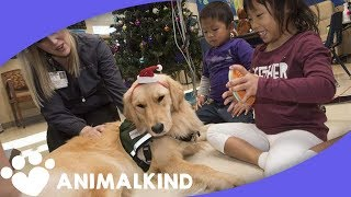 Therapy dog helps children with blood disorder