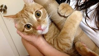 On a SCALE FROM 1-10, you will LAUGH FOR 100! - Best FUNNY ANIMAL compilation