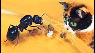 Slivki Show und neue Ameisen!