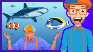 At an Aquarium with Blippi | Fish for Kids