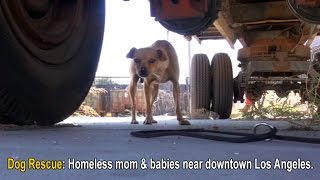 Dog Rescue: Homeless mom (Mable) and puppies (Dallas & Texas) near downtown Los Angeles.