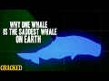 Why One Whale Is The Saddest Whale On Ea...mp3