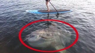 5 Giant Fish   Fishing Moments   Huge Fish Caught On Camera