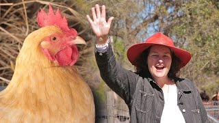 5 Deadly Mistakes To Avoid When Raising Chickens
