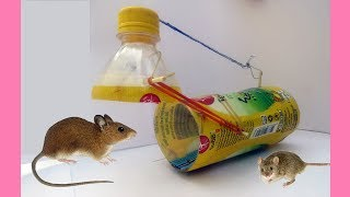 Bottle Mouse Trap - How To Make Bottle Mouse Or Rat Trap That Work 100%