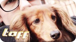 ALBTRAUM aller Tierbesitzer: So dreist gehen die Hunde-Diebe vor   taff   ProSieben