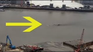 Man Spots Something Impossible Come Up To The Surface In London's River Thames