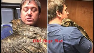 Owl Missed The Man Who Saved Her So Much She Couldn't Stop Hugging Him (Captioned With Update)