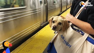 NYC Subway Dogs Brighten People