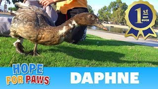 Kids can be so... AMAZING!  This duck wouldn