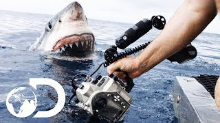 35ft Great White Shark Lurking in