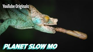 Fast Reptiles in Slow Mo