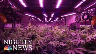 Canada Now World's Largest Legal Marijuana Marketplace | NBC Nightly News