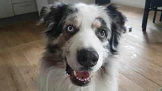 Dog Fetches the Kleenex || ViralHog