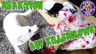KILLERCLOWN REAKTION BEI HUND| Krasses Experiment! | Family Fun