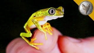 Rarest Frog in the World?