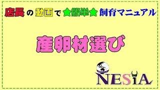 店長の動画で★簡単★飼育マニュアル【産卵材選び】