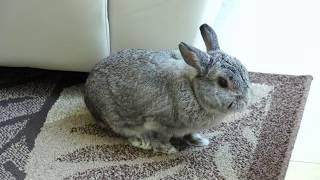 Professional Bunny Livestream