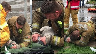 When Firefighters Pulled This Lifeless Pup From A Burning Building, The Race Was On To Revive Him