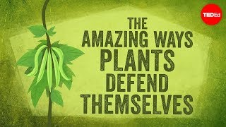 The amazing ways plants defend themselves - Valentin Hammoudi