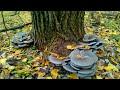 Сбор грибов - гриб веш�...mp3