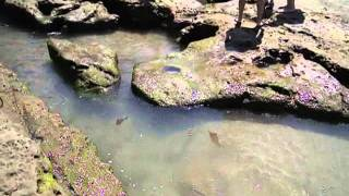 Ocean Beach Tidal Pools San Diego Attraction