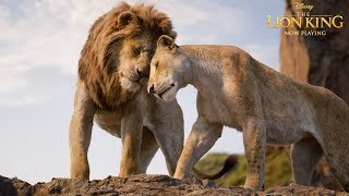 The Lion King   In Theatres Now