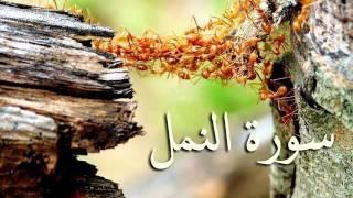 سورة النمل والقصص والعنكبوت والروم .. الصوت النّديّ الملائكي سعد الغامدي HQ