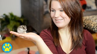 How To Choose A Healthy Hamster