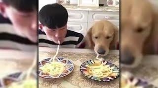 Mensch gegen Hund! Wer gewinnt beim Nudel-Wettessen?