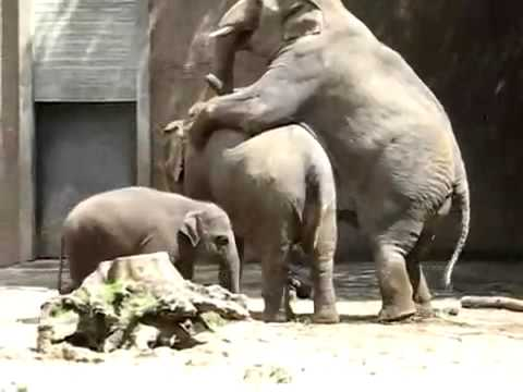 kak-slon-seks
