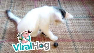 The Sweetest Paralyzed Kitten  || ViralHog