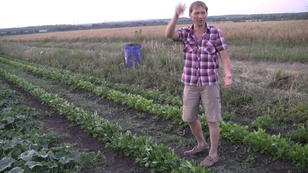Як правельно посадити квасолю і виростити її відео 9 фотография