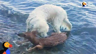 Animals Rescue Other Animals In Need | The Dodo Top 5