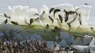 12 STRANGEST Things Found FROZEN IN ICE