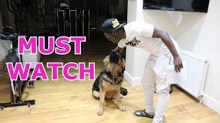 DOG PREDICTS KSI VS JOE WELLER FIGHT