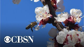 Honey bees a sweet target for thieves in California