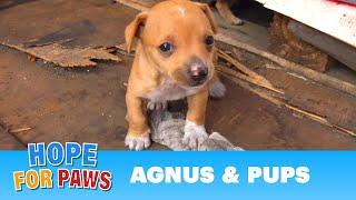 Dog had given birth in a shipping yard, but the guard didn